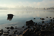 A bird flies past a foggy Seattle skyline at Gasworks Park on Dec. 24, 2020. (Erika Schultz / The Seattle Times)