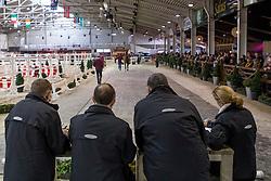 081, Diamo CK Z<br /> BWP Hengsten keuring Koningshooikt 2015<br /> © Hippo Foto - Dirk Caremans<br /> 22/01/16