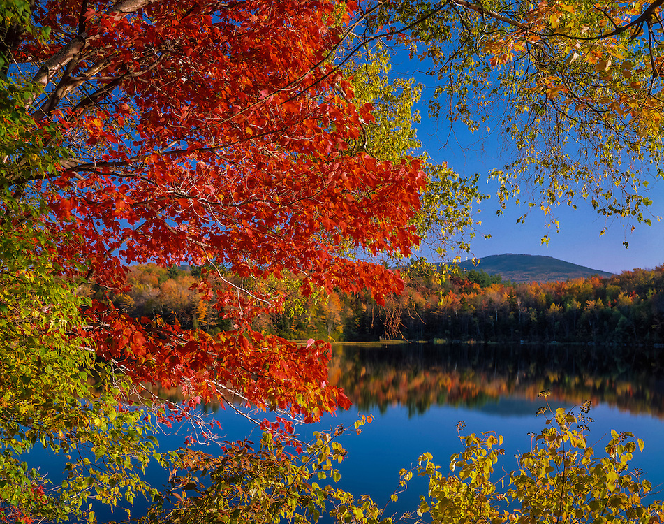 Brilliant red maple branches frame view of Mount Monadnock, pond reflections, Dublin, NH
