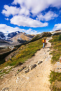 Hiker on Wilcox Ridge above the Columbia Icefields, Jasper National Park, Alberta, Canada