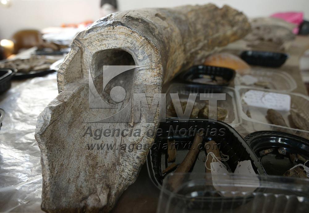 Atlacomulco, México (Octubre 21, 2016).- Silvia Murillo Rodríguez, investigadora del INAH y Doña Mago llevan 10 años  trabajando en la conservación de los huesos de al menos tres mamut que fueron encontrados en dos comunidades de Atlacomulco, los cuales pueden tener alrededor de 10 mil años de antigüedad.  Agencia MVT / Crisanta Espinosa.