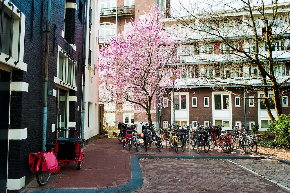 Nederland, Amsterdam, 22 april 2013<br />  Westelijke Eilanden, Vierwindenstraat.  Mooie bloeiende prunus in stedelijke omgeving<br /> Foto(c): Michiel Wijnbergh