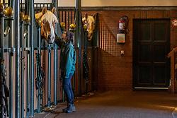 Stallen<br /> Stoeterij Diepensteyn - Steenhuffel  2020<br /> © Hippo Foto - Dirk Caremans<br /> 18/11/2020