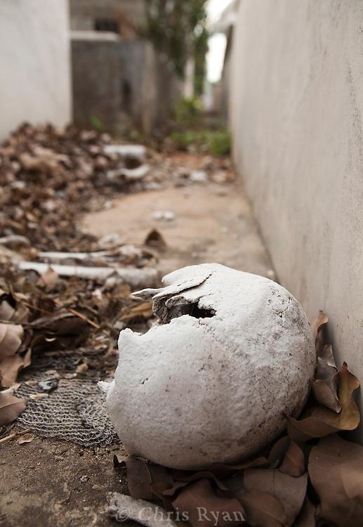 Human skull on ground between graves, Cementerio de Colon, Havana, Cuba