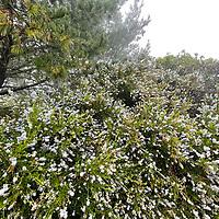 in a foggy forest near Half Moon Bay, California.