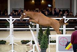 029, Never Alone Van't Heike<br /> BWP Hengsten keuring Koningshooikt 2015<br /> © Hippo Foto - Dirk Caremans<br /> 23/01/16