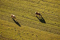 THEMENBILD - zwei Pferde auf einer Weide in Unterpeischlach. Kals am Grossglockner am Samstag 7. November 2020 // Two horses on a pasture in Unterpeischlach. Kals am Grossglockner on Saturday 7 November 2020. EXPA Pictures © 2020, PhotoCredit: EXPA/ Johann Groder