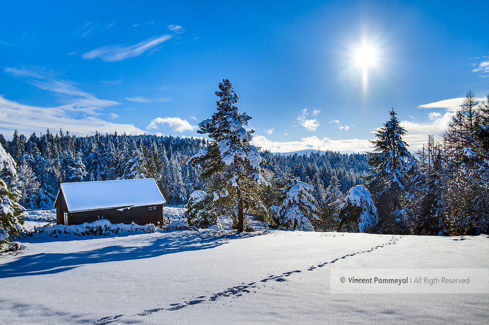 Winter and Nature