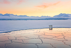 The Arctic is beautiful year-round, but it's stunning in the winter when everything is white and the sun stays low to the horizon.  On my first night on a boat-based trip in Svalbard, right after leaving Longyearbyen, we encountered this polar bear walking along the edge of the ice.  She was curious, walking past us twice, with her full white coat glowing beautifully in the setting sun, and after growing bored with us, she silently walked off into the distance.