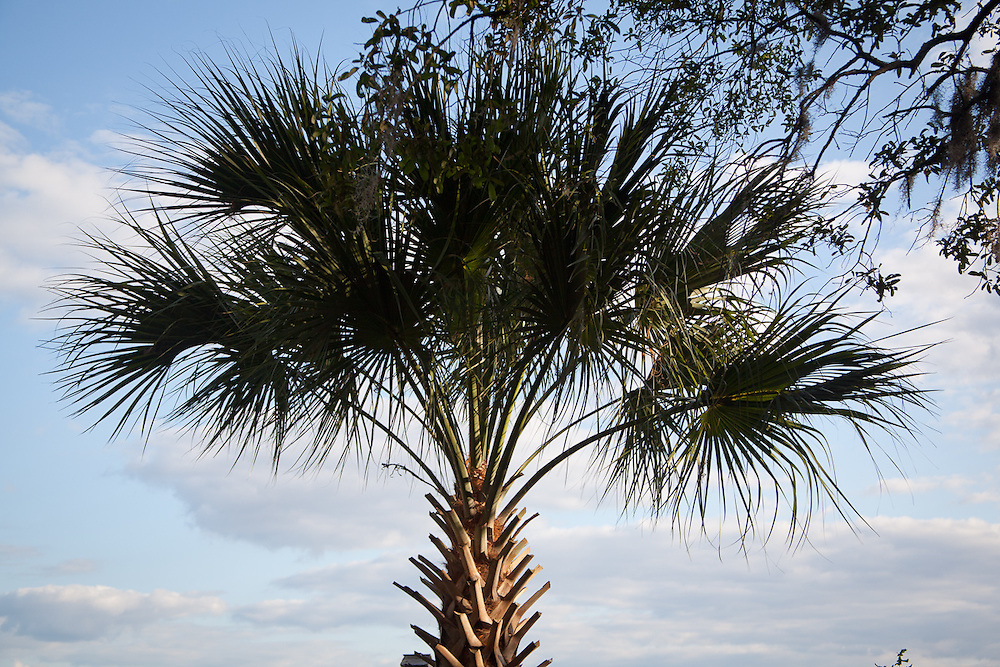 A palmetto stands against water and sky on the river bluff at 33 Pine View Drive.