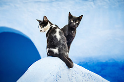 Black cats and blue wall, Chefchaouen, Morocco