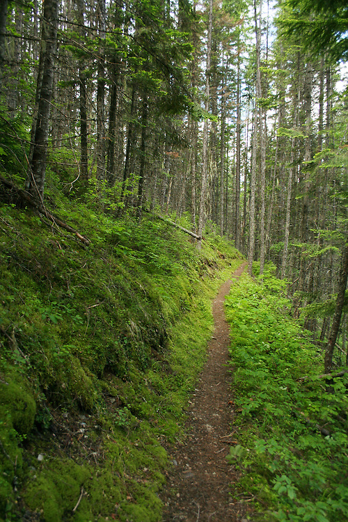 Noisey Creek Trail in the Colville National Forest.