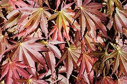 flora, flower Herfstblad, Autumn leave