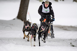 First place finisher Rejean Therrien charges up the back nine at Laconia Country Club on the final day of the World Championship Sled Dog Derby on Sunday February 16, 2020.(Alan MacRae for the Laconia Daily Sun)