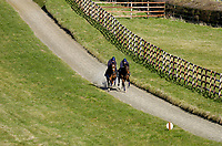 Photo: Alan Crowhurst.<br />Pat Eddery Racing Stables. 01/03/2006. On the gallops.