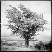 Exmoor 2011
