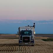 Hans Shuman, 25, waits for the last load of wheat to drive to the grain elevator. Kimball, Nebraska, July 2017.