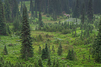 Paradise wildflower meadows Mount Rainier National Park Washington