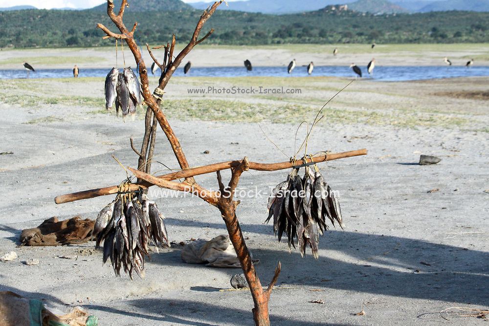 Africa, Tanzania, Lake Eyasi National Park Fishing in the lake The catch of the day hangs on a branch