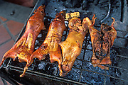 ECUADOR HIGHLANDS, FOOD Banos; 'Cuy' roasted guinea pig