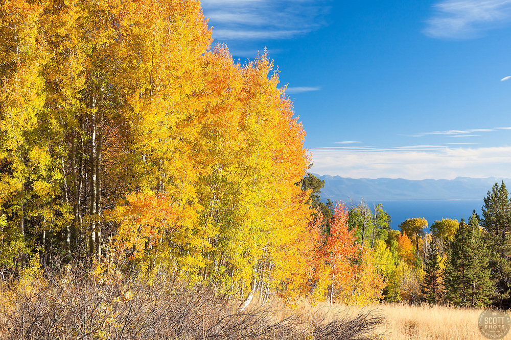 """""""Aspens Above Lake Tahoe 2"""" - Photograph of yellow, orange, red, and green fall colored aspens above a blue Lake Tahoe."""