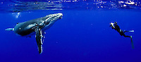 These are photo taken in 2008-9 in Tonga, whales, beach, Bahamas, Bimini, humpback whales, spotted dolphins, Atlantic, South Pacific
