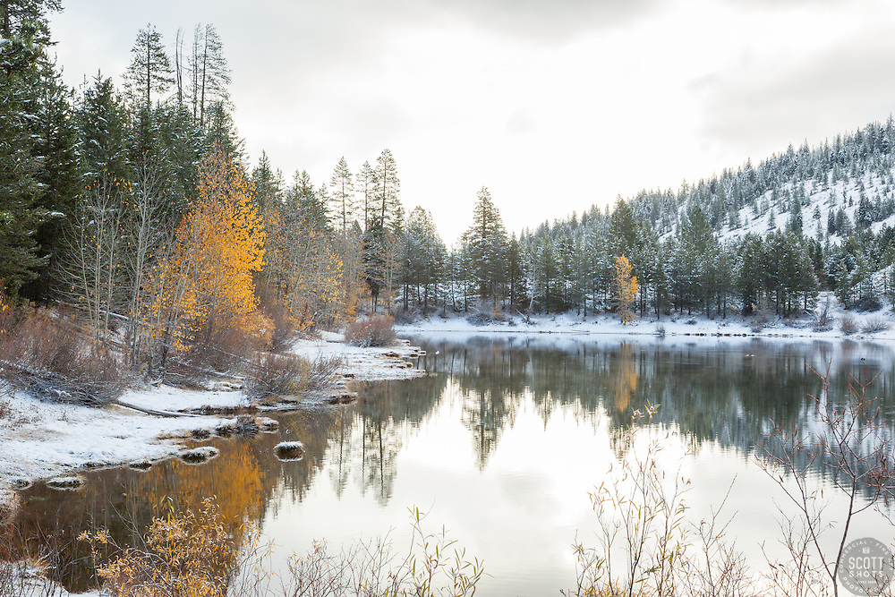 """""""Snowy Coldstream Pond 4"""" - This yellow leaved Cottonwood tree was photographed at a snowy Coldstream Pond in Truckee, California."""