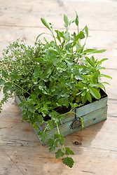Herbs in metal containers