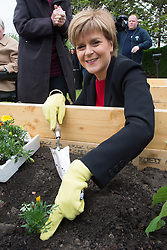 © Licensed to London News Pictures. 27/05/2015.  <br /> <br /> First Minister Nicola Sturgeon of the Scottish National Party visited Castle Rock Housing Association, ahead of the UK Government's Queen's Speech.<br /> <br /> During the visit Nicola Sturgeon spoke to staff and tenants of the development working in a new community garden as part of a wider project to tackle isolation that has received funding from the Scottish Governmen's People and Communities Fund, before planting her contribution to the beginnings of a new garden.<br /> <br /> Photo credit should read Max Bryan/LNP