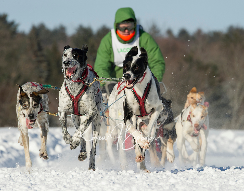 Chris Carter of Penacook, NH brings his team (sponsors Pike Industries and Tilton Rental Center) towards the finish line during the first Open Class race of the 86th annual Laconia World Championship Sled Dog Races Friday afternoon.  (Karen Bobotas/for the Laconia Daily Sun)