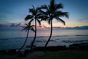 Three Coconut Palm Tree, Sunrise, Hauula, Windward, Oahu, Hawaii
