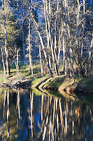Light and Shadow on Trees in Forest Along Merced River, Yosemite National Park, California