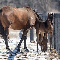 Ron Clarkson - Thoroughbred Horse Breeder