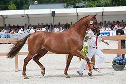 114, Galoma<br /> Nationale Merriekeuring, 4 tem 7 jarige Keur-en Elitemerries<br /> KWPN Paardendagen Ermelo 2015<br /> © Hippo Foto - Leanjo de Koster