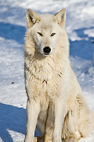 Zoo Photography 101 at the Calgary Zoo