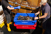 Two fishermen on a boat load two boxes of shellfish on an overhead fully in Europes lobster capital on 2nd June, 2021 in Bridlington, United Kingdom. A combination of Brexit bureaucracy and Covid-19 have decimated Bridlingtons shellfish trade, the largest lobster landing port in Europe.