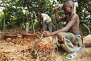 Firimin Kouassi, 13, (R) uses a machete to break off palm nuts on a cocoa plantation near the town of Moussadougou, Bas-Sassandra region, Cote d'Ivoire on Monday March 5, 2012.