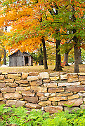 A rustic rock wall and old barn among yellow trees in fall.
