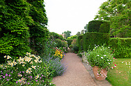 Alstroemeria and Nepeta in herbaceous borders along a gravel path at Cothay Manor, Greenham, Wellington, Somerset, UK