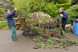 © Licensed to London News Pictures. 14/05/2012. Bristol, UK.  Staff disguise Animatronic Dinsosaurs from Texas on arrive at Bristol Zoo, ready for showing to the public on 24 May.  14 May 2012..Photo credit : Simon Chapman/LNP