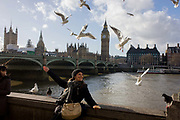 A tourist is surrounded by a flock of greedy gulls hovering above on London's Southbank, opposite the Westminster parliament. Echoing the birds' wings, the young lady has an arm outstretched and she entices the birds to flock around her head and the avian creatures swarm excitedly in the air above. In the background is the expanse of Westminster Bridge with the Houses of Parliament and the tall clock tower containing the Big Ben bell.