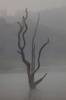 Periyar Lake Reserve in Kerala state india