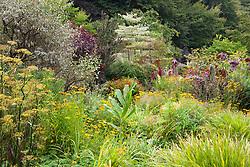 The brick garden in early autumn. Rudbeckia fulgida var. deamii, fennel and Hakonechloa macra