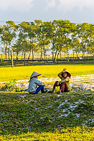 Farmers watch over their cattle in the countryside outside Hue, Central Vietnam.