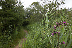 Calvert, UK. 27 July, 2020. A path winds its way through trees, undergrowth and wildflowers at Calvert Jubilee Nature Reserve. On 22nd July, the Berks, Bucks and Oxon Wildlife Trust (BBOWT) reported that it had been informed of HS2's intention to take possession of part of Calvert Jubilee nature reserve, which is home to bittern, breeding tern and some of the UK's rarest butterflies, on 28th July to undertake unspecified clearance works in connection with the high-speed rail link.