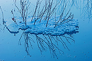Twigs and snow in pool of Vermilion Lakes, Banff National Park, Alberta, Canada