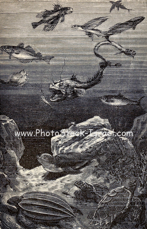 Scene in the Adriatic From the Book Twenty thousand leagues under the seas, or, The marvelous and exciting adventures of Pierre Aronnax, Conseil his servant, and Ned Land, a Canadian harpooner by Verne, Jules, 1828-1905 Published in Boston by J.R. Osgood in 1875