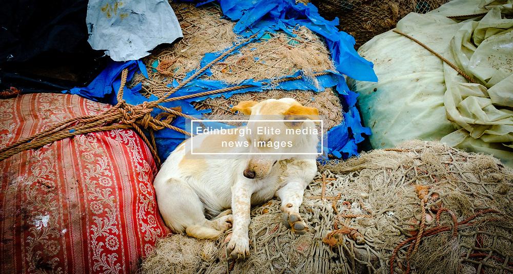 A sleeping dog at the harbour in Essaouira, Morroco<br /> <br /> (c) Andrew Wilson | Edinburgh Elite media