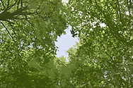 Abstract woodland canopy
