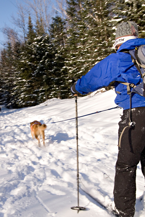 A skijorer skis with her dog in Michigan's Upper Peninsula.